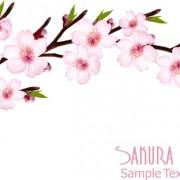 Link toBeautiful sakura vector background graphics 01 free