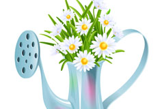 Beautiful shower pot with daisies vector