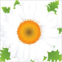 Link toBeautiful small flowers vector 2