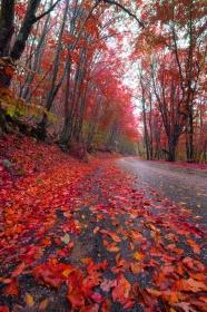 Link toBeautiful steps in autumn landscape picture