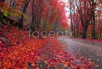 Link toBeautiful steps in autumn maple leaf chinese restaurant landscape hd pictures