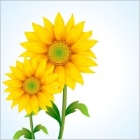 Link toBeautiful sunflower vector