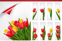 Link toBeautiful tulip card vector