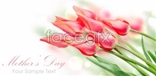Link topicture hd tulips Beautiful