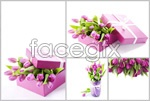 Link toBeautiful tulips psd