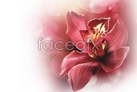 Link toBeautiful warm red lilies hd pictures