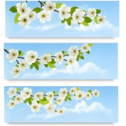 Link toBeautiful white flowers vector banner 02 free