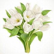 Link toBeautiful white tulips vector free