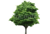 Link toBig tree high definition pictures