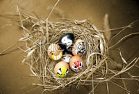 Link toBird egg art hd photo