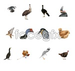 Link toBirds hd pictures set 2 psd