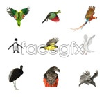 Link toBirds set hd pictures psd