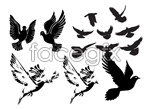 Link toBlack and white pigeons or sketches vector