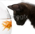 Link toBlack cat and goldfish 2 psd