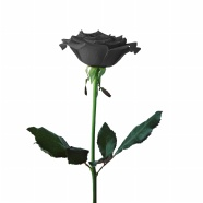 Link toBlack roses hd large pictures