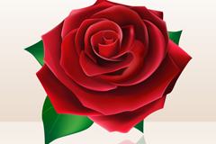 Link toBlooming red roses vector