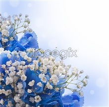 Link topicture flower Blue