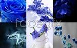 Link toBlue plants psd