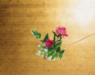 Link toBonsai flower pictures download
