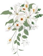 Link toBouquet vector white