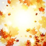 Link toBright autumn leaves vector backgrounds 06