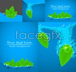 Bright blue-green leaf vector