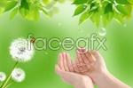 Link toBright green dandelion psd