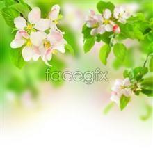 Link toBright green flowers