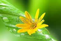Link toBright yellow flowers hd picture
