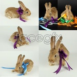 Link toBunnies and ribbons psd