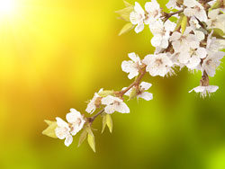 Link toBusiness background picture spring 01-hd pictures