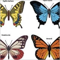 Link toButterflies free vector