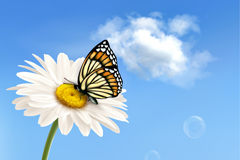 Butterfly daisy fresh background vector