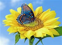 Link toButterfly daisy pictures hd