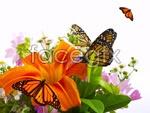 Link toButterfly lily psd