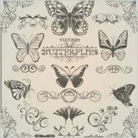 Link toButterfly pattern 1 vector