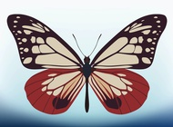 Link toButterfly vector design free
