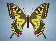 Link toButterfly vector image free