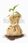 Link toCare of plants psd