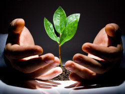 Link toCare of seedlings on the growth of picture material