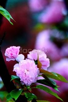 Link toCherry blossom pho