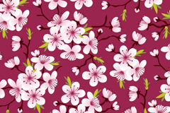 Cherry blossoms in full bloom for seamless vector background illustration