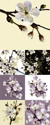 Link toCherry tree flowers vector