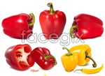 Link toChili peppers and vegetables vector