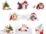 Link toChristmas cat psd