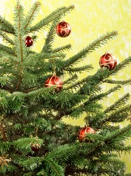Link toChristmas tree picture material download