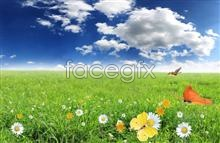 Link toClean and elegant scenery pictures