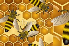 Clear magnify bee vector