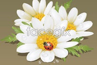 Link toCoccinella and flowers vector