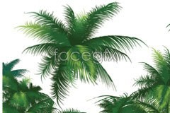 Link tovector palm Coconut